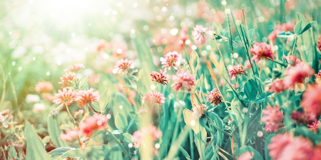 Flores silvestres de trébol en rayos de sol