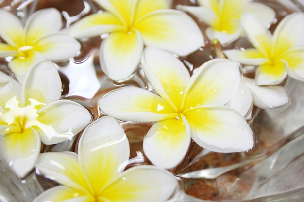 Flores tropicales frangipani flotando en el agua