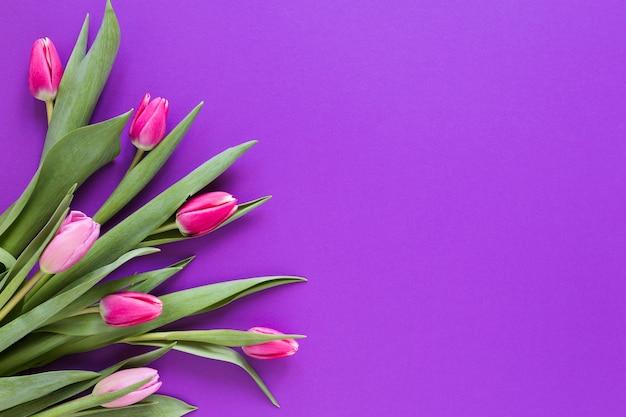 Flores de tulipán rosa degradado con espacio de copia