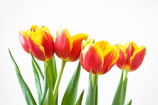 Flores de tulipán de san valentín