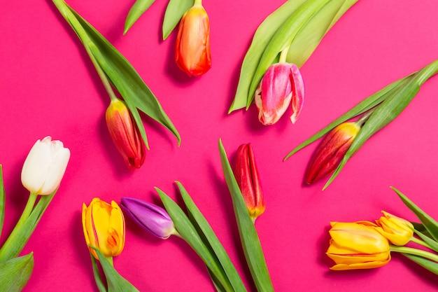 Flores de tulipanes de colores sobre fondo morado