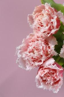 Flores de tulipanes tarjeta de flores primer plano de tulipanes de felpa rosa