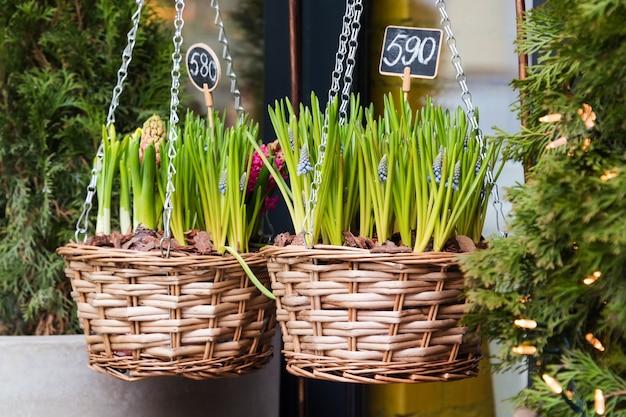Flores a la venta en el mercado de las flores. flores bulbosas perennes para el jardín.