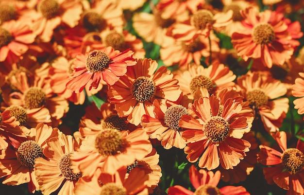 Flores de verano naranja