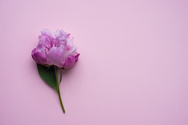 Flores de verano con peonía