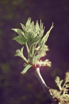 Florezca la hoja en un resorte de rama con filtro
