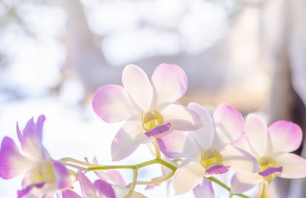 Florezca la naturaleza, cierre de la orquídea en la iluminación de la naturaleza.