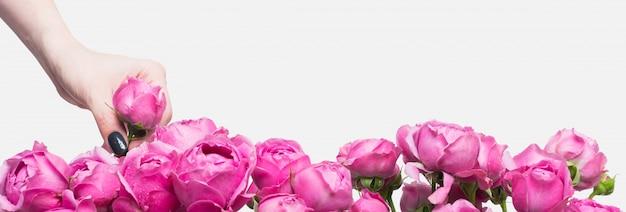 La florista tiene pequeños capullos de rosas rosadas en la mano. la elección de las flores para el ramo. gotas de agua sobre los pétalos.