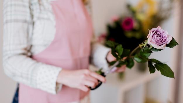 Floristería de mujer de cultivo preparar rosa