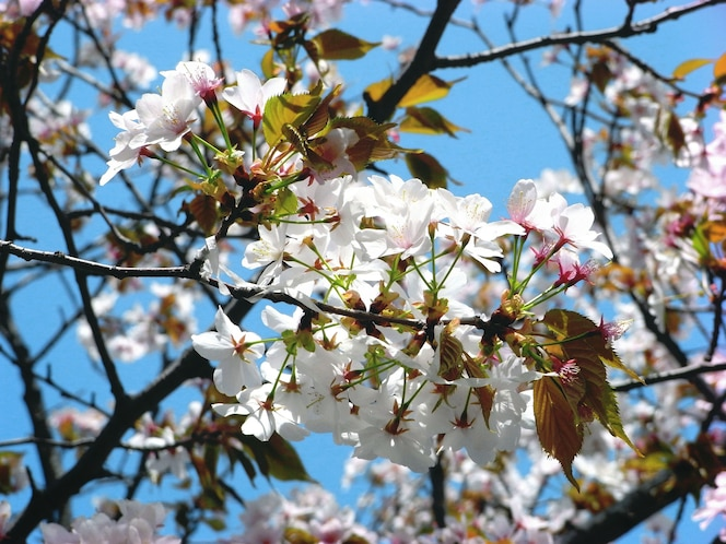 Flower blossom botanical spring beautiful concept