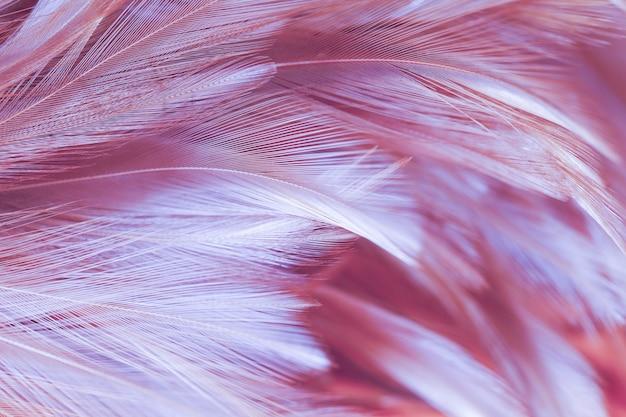 Fluffy de plumas de pollo en estilo suave y borroso para el fondo, arte abstracto