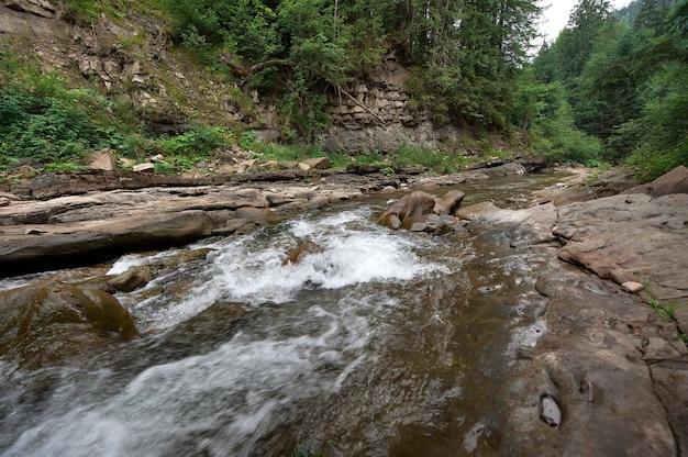 Flujo del río de montaña a través del bosque. hermoso paisaje de los cárpatos con aguas cristalinas en un río de montaña.