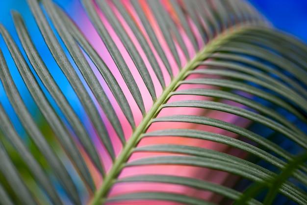 Foco selectivo de la hoja de planta de interior. fondo azul y rosa borroneada.