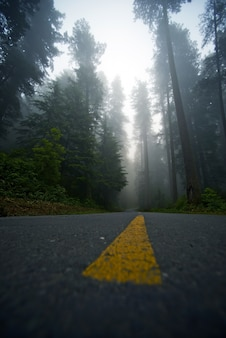 Foggy forest drive