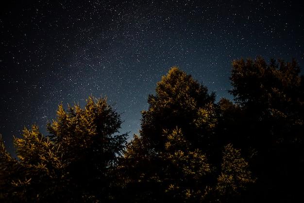 Follaje de bosque verde en una noche estrellada
