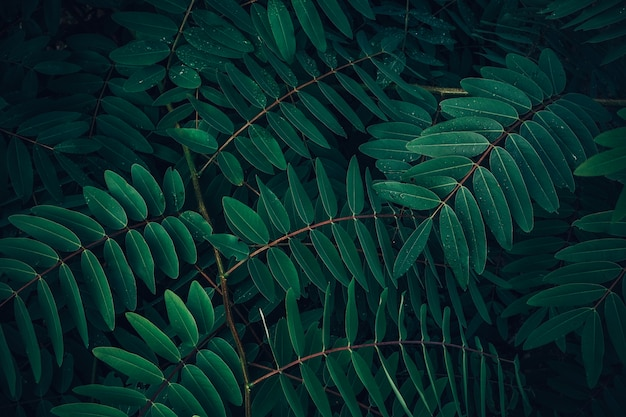 Follaje de hoja tropical en verde oscuro con gota de agua de lluvia en textura