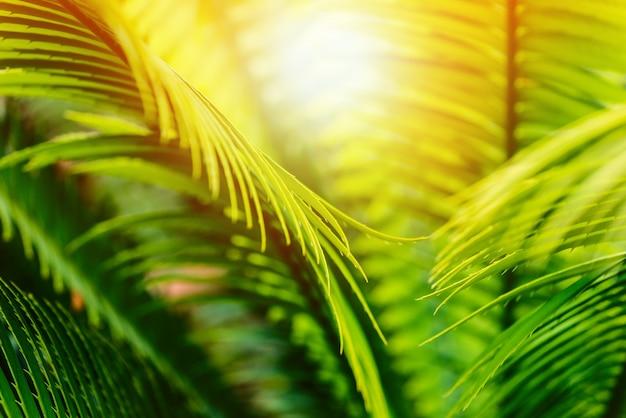 Follaje de palmeras tropicales y luz solar caliente: concepto de viaje o producto tropical