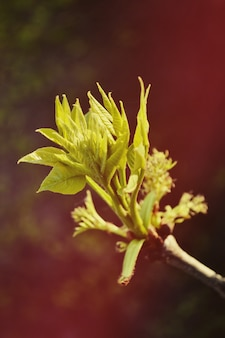 Follaje a principios de primavera con filtro.