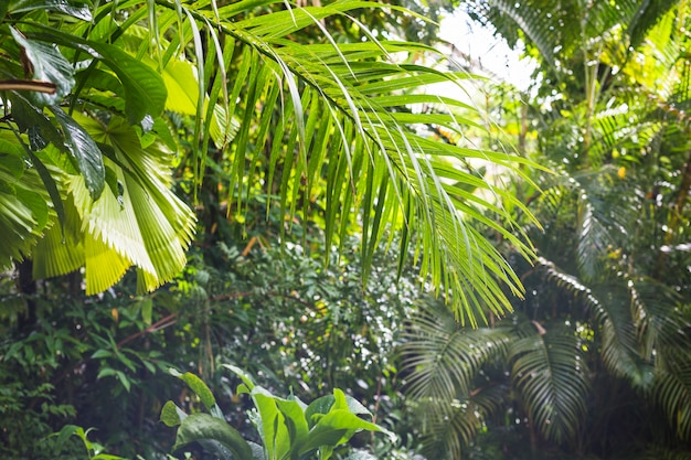 Follaje tropical exótico en bosque lluvioso