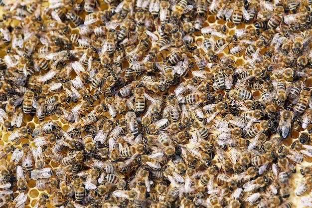 Fondo de abejas de miel