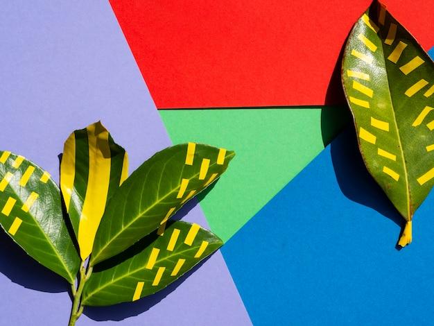 Fondo abstracto con capas y hojas verdes