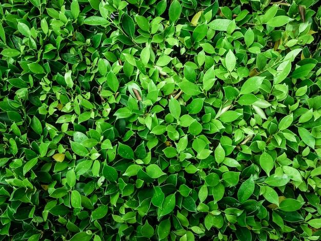 Fondo abstracto de hoja verde