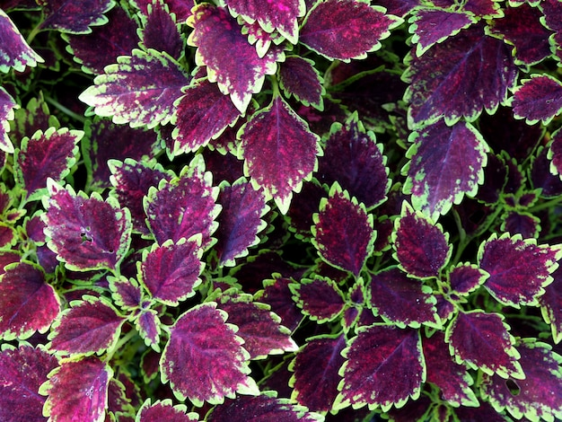 Fondo abstracto de hojas violetas y verdes