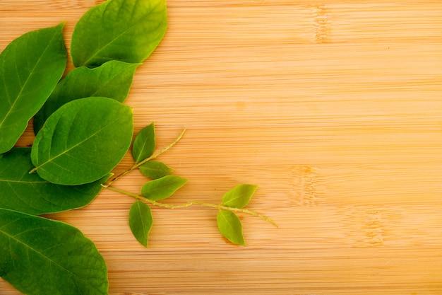 Fondo abstracto de marco de hojas verdes aislado en blanco