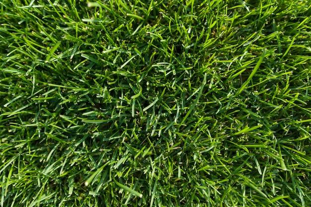 Fondo abstracto de la textura, hierba verde brillante natural