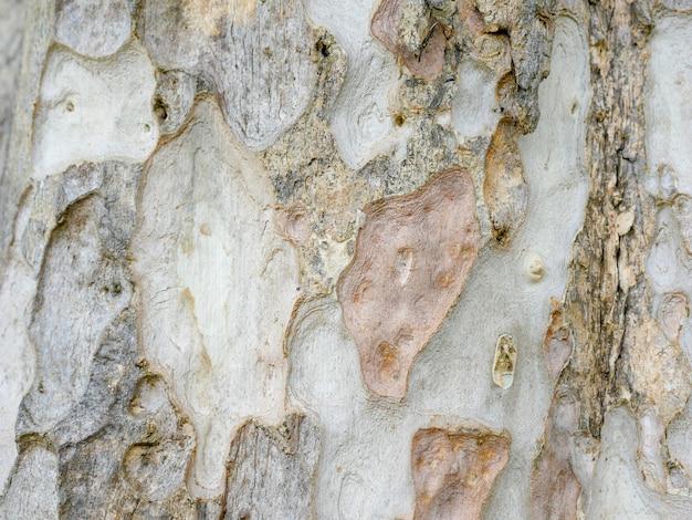 Fondo abstracto de la textura de madera de la corteza de árbol