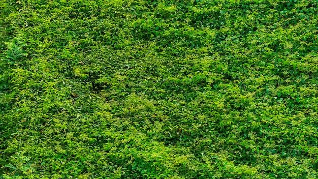 Fondo abstracto de la textura de la planta verde