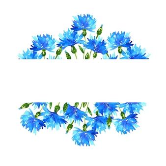 Fondo con acianos. marco con hermosas flores azules. ilustración acuarela dibujada a mano. aislado.
