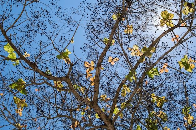 Fondo de árbol de hojas verdes con luz solar