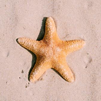 Fondo de arena con estrella de mar