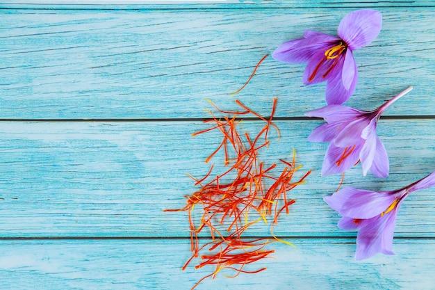 Fondo azul con flores de color púrpura azafrán y estambres.