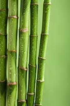 Fondo de bambú verde con gotas de agua