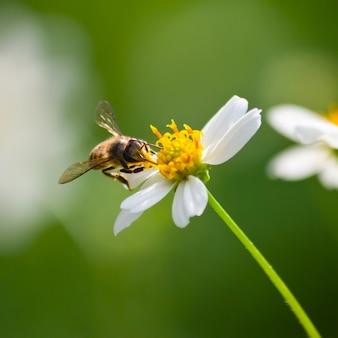 Fondo la belleza del primer insecto polinización