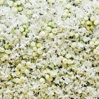 Fondo blanco de la flor de las orquídeas para la boda y el evento