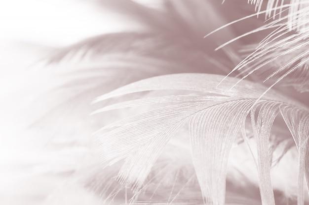 Fondo blanco-marrón hermoso de la textura de la pluma