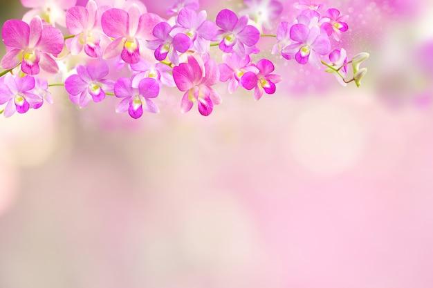Fondo de borde de flor de orquídea rosa y púrpura
