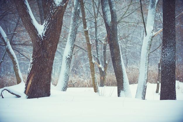 Fondo borroso con árboles, nieve que cae