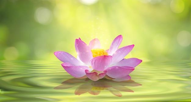 Fondo de brillo de luz flotante púrpura claro blanco loto