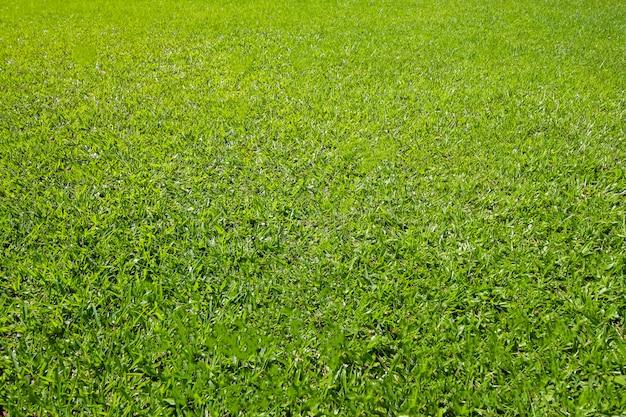 Fondo de campo de hierba verde