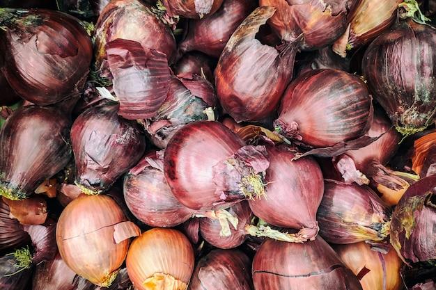 Fondo de cebolla morada. cebolla fresca variedad cultivada en la tienda.