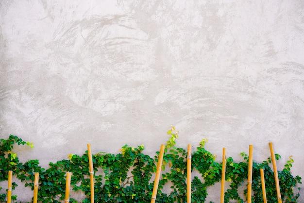 Fondo de cemento blanco con planta.