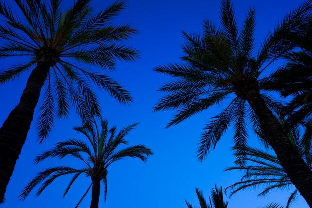 Fondo de cielo azul con la silueta de algunas palmeras tropicales al atardecer visto desde abajo.