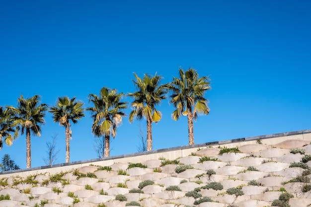 Fondo del cielo con la fila de palmeras en el sol.