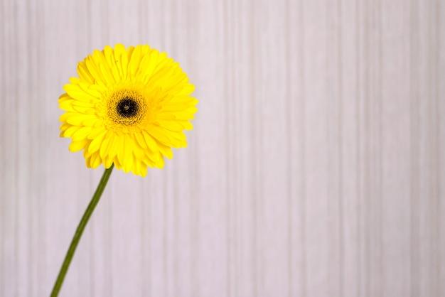 Fondo claro con flor amarilla brillante