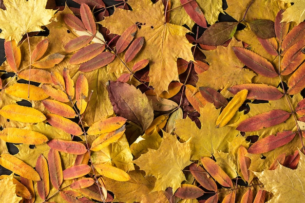 Fondo colorido y brillante hecho de hojas de otoño caidas.