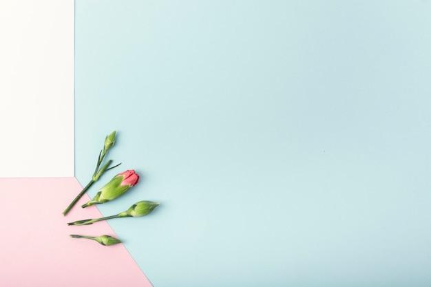 Fondo colorido y flores con espacio de copia